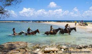 Top 10 reasons to visit Jamaica Braco Stables